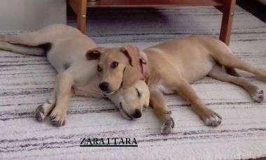 FOTO: UŽAS U ZAGORI U istom selu gdje je pronađen izgladnjeli pas Bono spašene dvije kujice