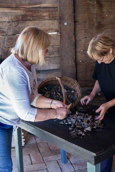 Sisak, 201017. U okolici Siska u sumi oko sela Duzica trazili smo i brali gljive crne trube. Foto: Berislava Picek / CROPIX