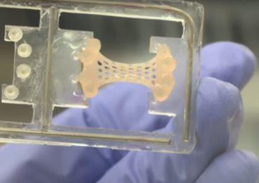 VIDEO: REVOLUCIONARNA METODA MOGLA BI SPASITI OGROMAN BROJ LJUDI OD NAJČEŠĆEG UZROKA SMRTI 'Osmislili smo zakrpu koja regenerira srce nakon infarkta!'