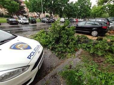 Zagreb, 200520. U naselju Malesnica, u ulici Ivane Brlic Mazuranic 36, drvo je jutros palo na aute. Ostecena su dva automobila. Foto: Davor Pongracic / CROPIX